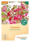 Blumen Cosmea              G-A