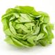 Salate | Blattgemüse